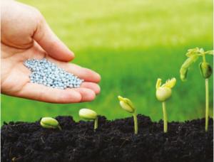 Fertilisation : nourrir les plantes & les hommes, mais à quel prix ?