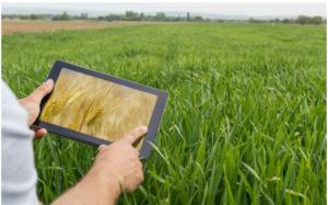 La prédiction en agriculture