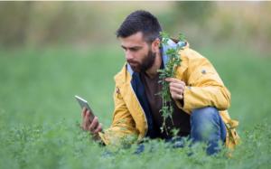 Analyse et prédiction agricole