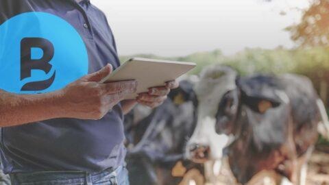 Logiciel de gestion des élevages