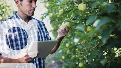logiciel arboriculture maraîchage